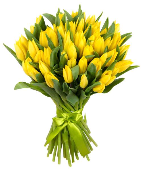 51 желтый тюльпан